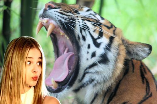 Chloe tiger