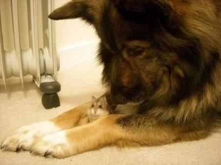 Dog & hamster