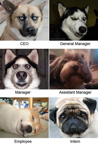 Dog Workers