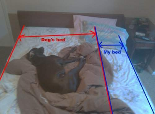 Dog's बिस्तर
