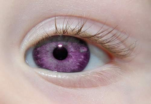 violeta Eye