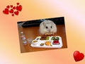 Hamster Breakfast - hamsters photo