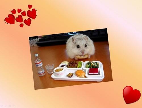 hamster Breakfast