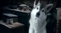 Nymeria - Arya's direwolf - game-of-thrones-direwolves photo