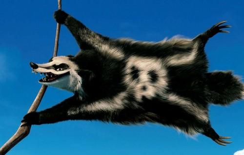 Teaser poster das, badger close up