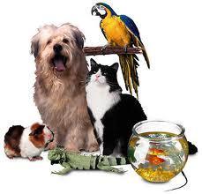 動物 need help