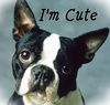 Dogs photo titled Boston Terrier icon.