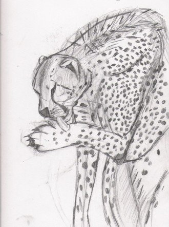 Cheetah drawing.