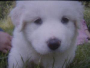 Cutest cún yêu, con chó con in the world!