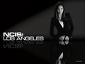 Daniela Ruah in Black - daniela-ruah wallpaper