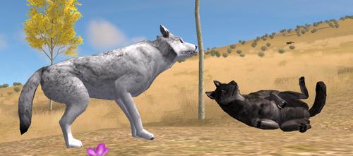Dead lobo