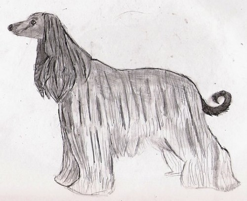 My afgano Hound drawing.