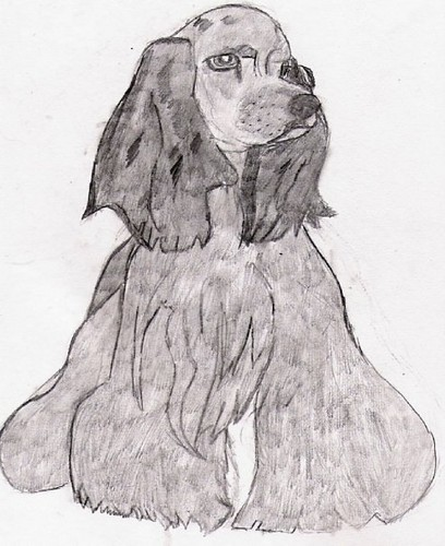 My Cocker spaniel, سپنیل drawing.