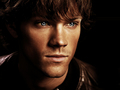 Sammy - sam-winchester wallpaper