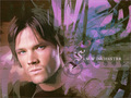 Sammy ♥ - sam-winchester wallpaper