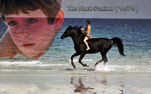 The Black Stalion 1979 - movies Wallpaper