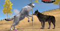 Wolf Fight - wolfquest photo
