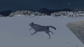 WolfQuest 2.5 - wolfquest photo