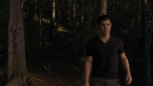 Jacob Black wallpaper with a sitka spruce, a ponderosa, and a beech entitled breaking dawn part 1 tv spot