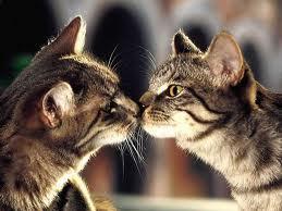 sweet 子猫