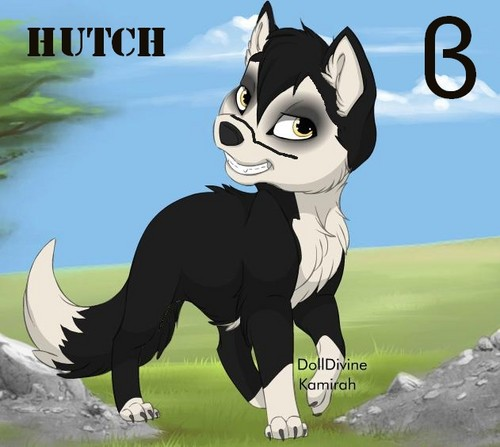 Hutch as a chiot