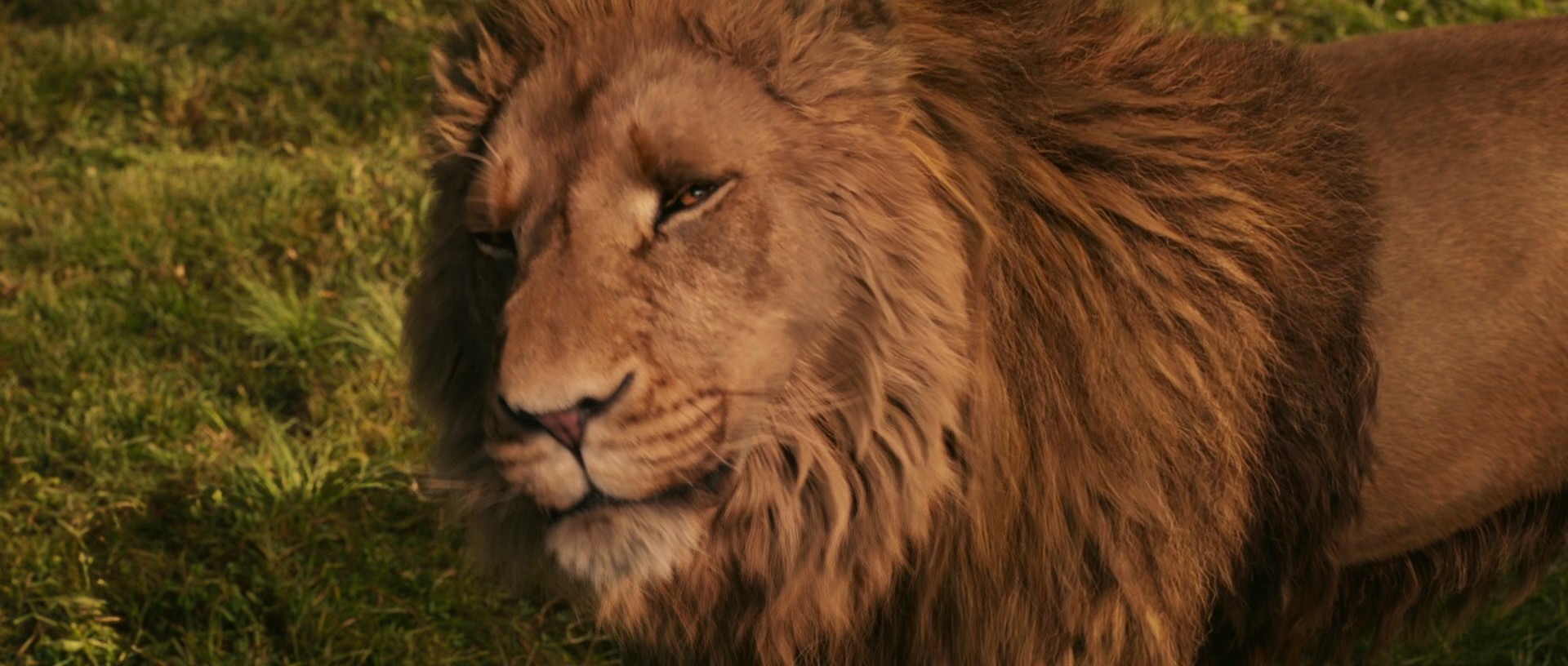 narnia the lion the witch and the wardrobe aslan