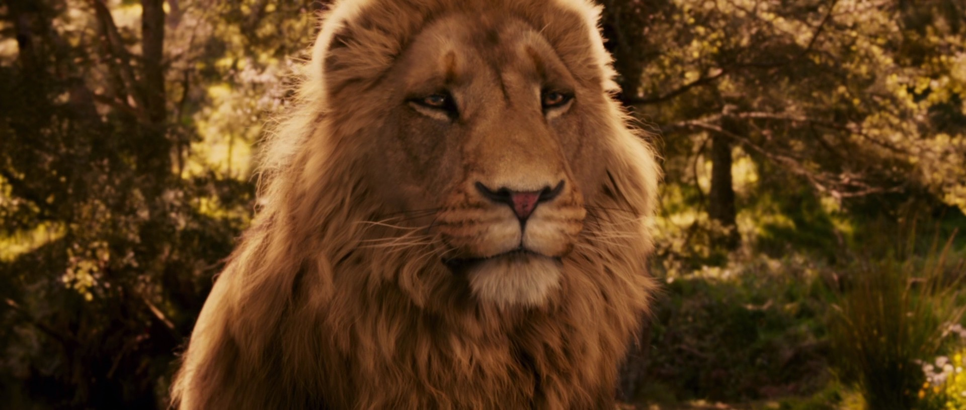 the chronicles of narnia images the chronicles of narnia: the lion