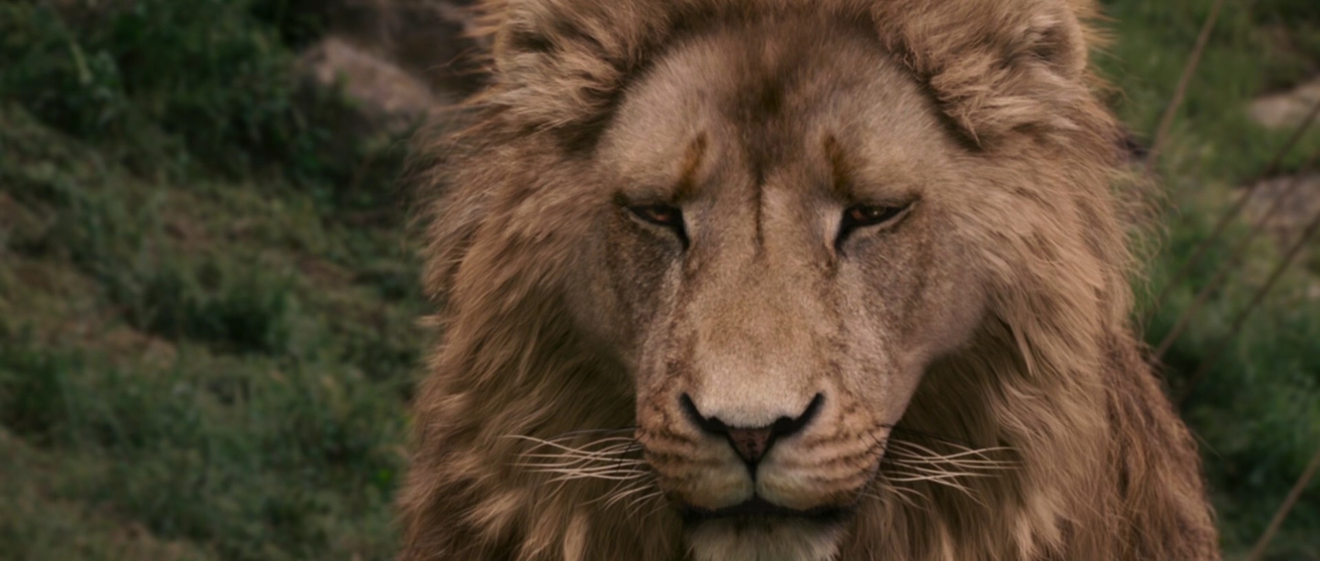 The Chronicles Of Narnia Images The Chronicles Of Narnia The Lion
