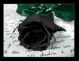 Writing Roses in Black