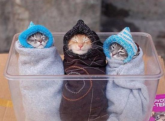 trpley kitties :3