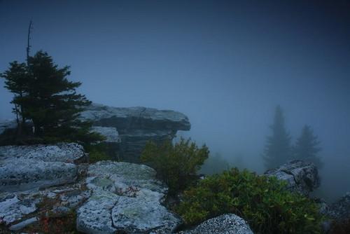 Foggy Hilltop