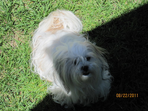 My Dog gänseblümchen, daisy