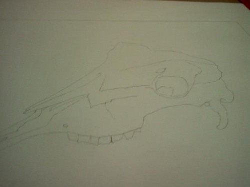 My goat skull drawing outlined