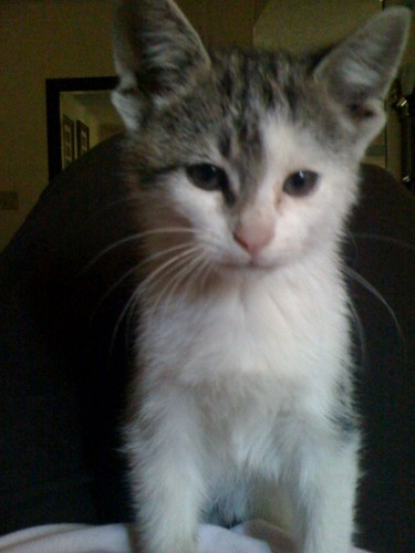 My new kitten :)