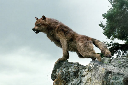 The wolf Pack Pictures