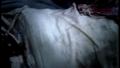 csi - 2x20- Cats in the Cradle screencap