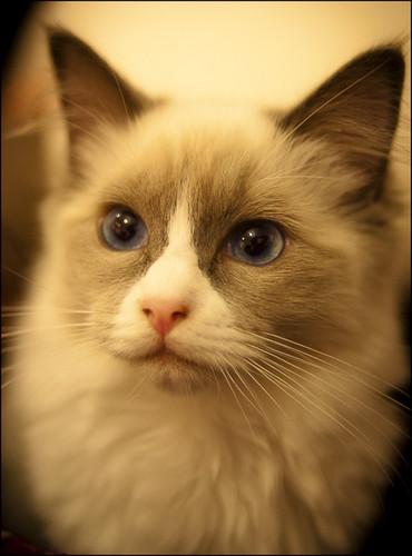 Кошки <3