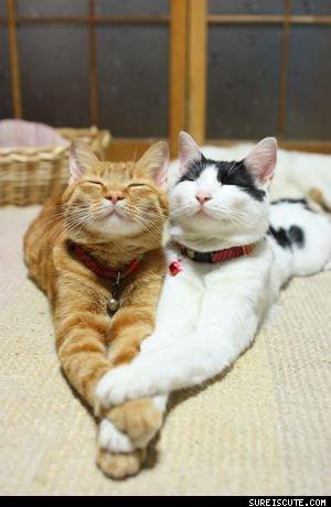 Cute Kitties <3