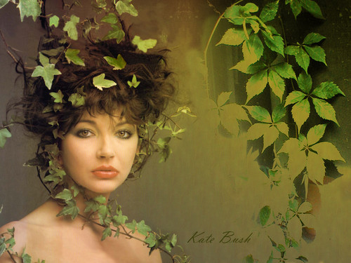 Kate belukar, bush kertas dinding