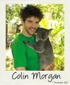 Koala - colin-morgan photo