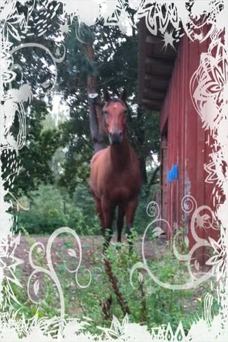 My quarter horse Zeb