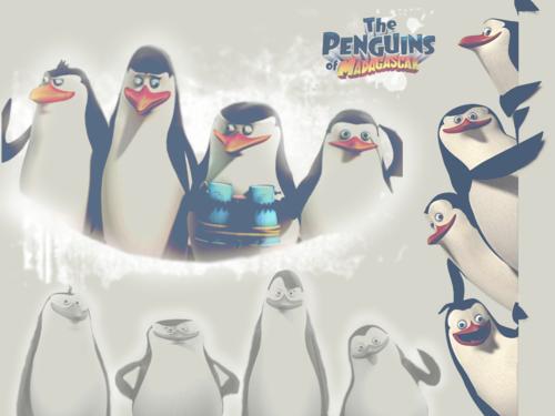 पेंग्विन्स ऑफ मॅडगास्कर वॉलपेपर entitled POM