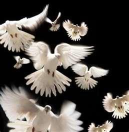 Doves wallpaper entitled doves