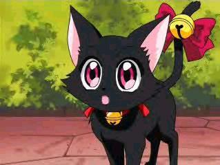 mew mew cat zoey
