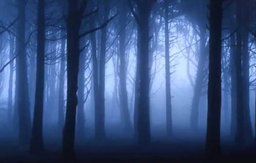 Dark Woodland Night Wallpaper