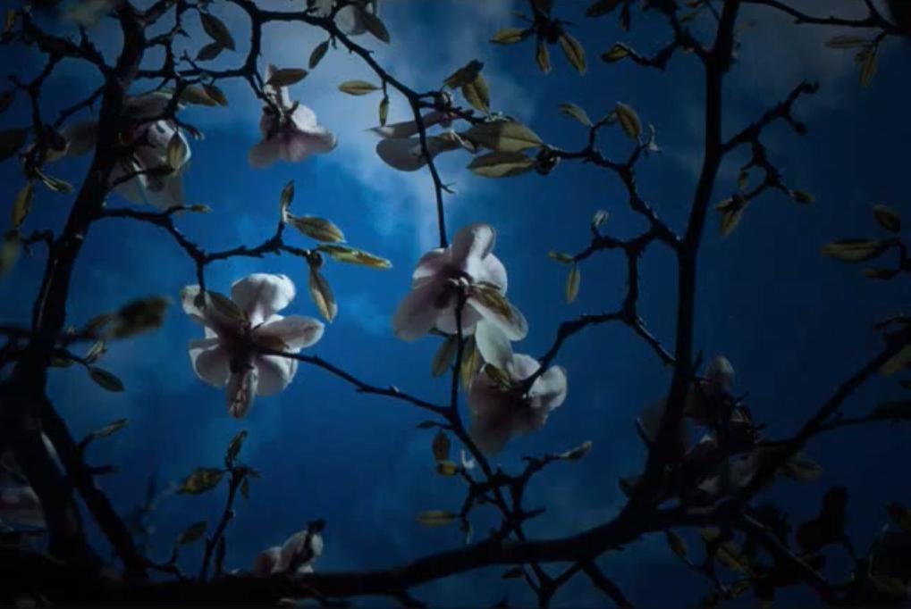 Dark Woodland Night Wallpaper Sesshyswind Photo