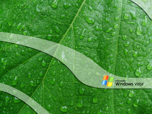 Windows 7 壁紙 entitled Green-Leaf-Vista003