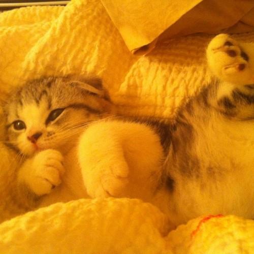 Meredith schnell, swift