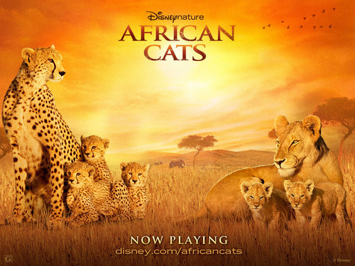 African 고양이