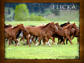 Flicka Wallpaper 5 1024